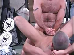 Horny muscled bears perform awesome threesome in gym.
